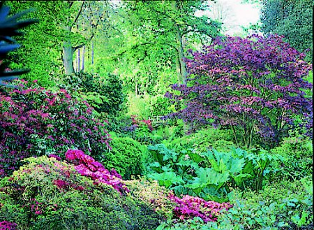 Small tree zone 5 garden inspiration for Dwarf ornamental trees for zone 4